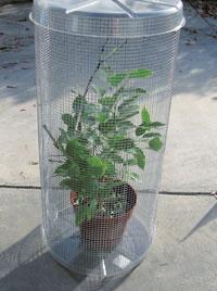DIY Chameleon Lizard Cage