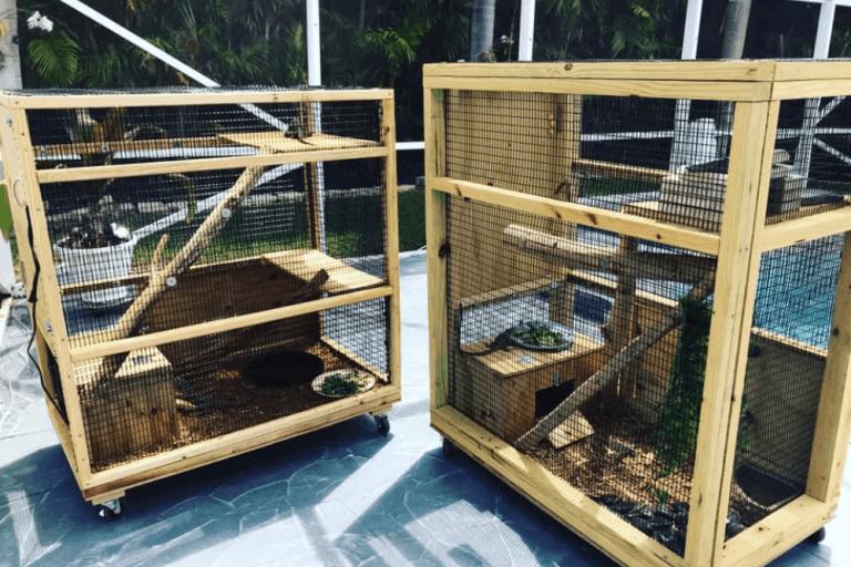 DIY Iguana Cage