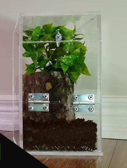DIY Reptile Enclosure Plan Made Out of Acrylic Terrarium
